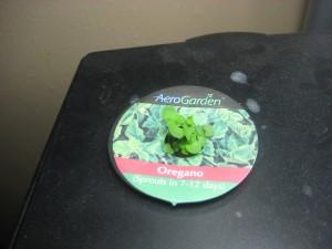 Aerogarden Herbs